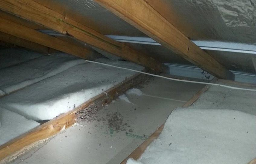 Roof damage by termites.
